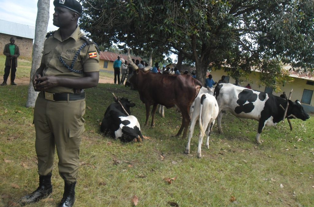 Police Arrest Youth For Stealing Father's Oxen