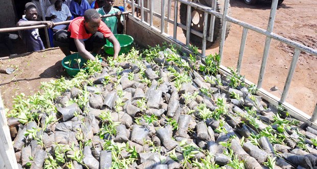 Operation Wealth Creation Seedlings worth 1M Wither In Agali