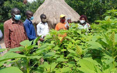 Sasakawa Global 2000 Boosting Agricultural Production in Lango