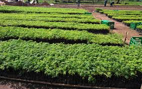 Alito Farmers In Kole To Plant Over 10,000 Trees To Mitigate Climate Change