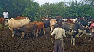 Covid-19 Lock Down: Kwania Hit With Theft Of Domestic Animals